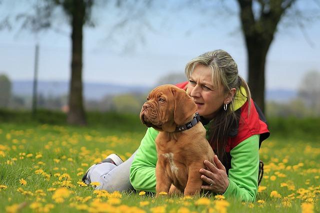Loved pet dog