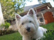 Terrier dog in backyard