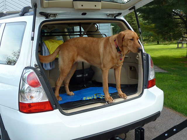 The back section of a car like this can be a perfect spot for your dog to travel