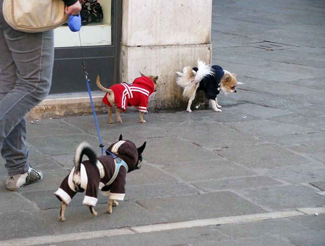 Small dogs walking down the street