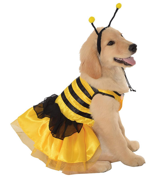 Bee dog dress costume