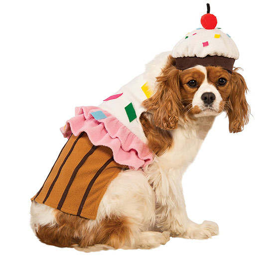 Cupake dog costume
