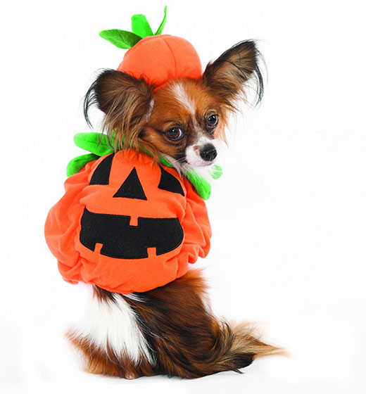 Halloween Pumpkin Costume for Dogs