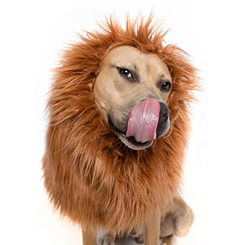 Lion mane dog halloween costume