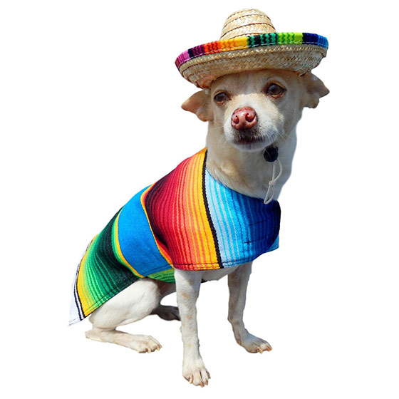 Mexican Poncho dog costume