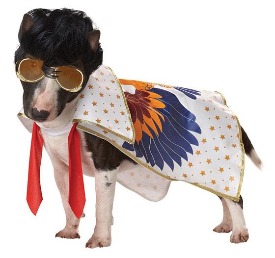 Pup-A-Razzi dog costume