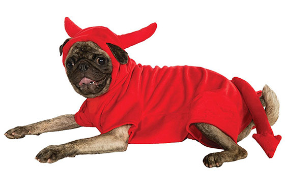 Red devil halloween costume for dogs