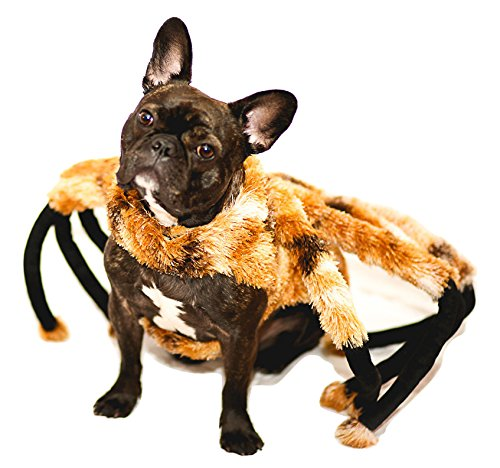 Spider dog costume