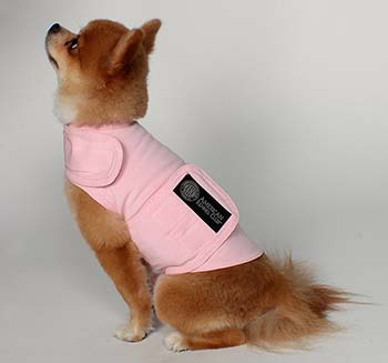 American Kennel Club dog calming coat small