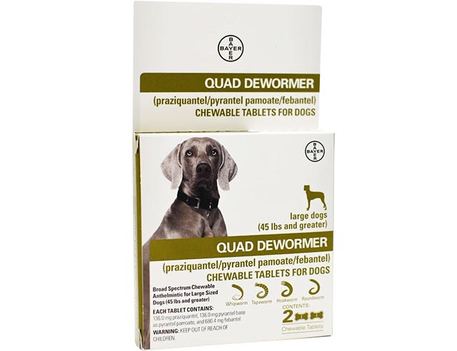 Top Dewormers for Dogs & Puppies (Guide & Reviews)