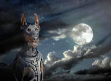 Barking at night is a common dog problem