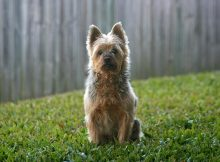Dog in neighbourhood backyard