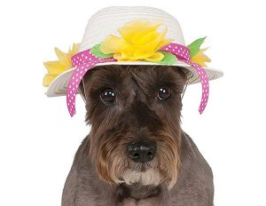 Dog easter hat