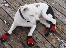 A dog wearing shoes in winter
