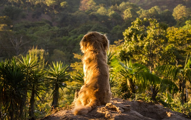 Phoot of dog in nature