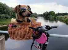 Dog on a bike in basket