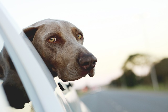 Dog photograph with eye contact