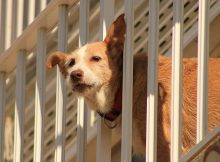 Dog looking through the fence