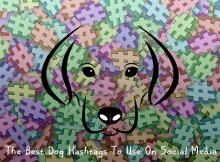 social media (instagram, twitter) hashtags for dogs